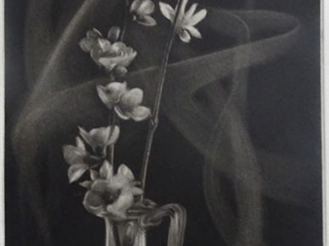 printemps précoce - manière noire