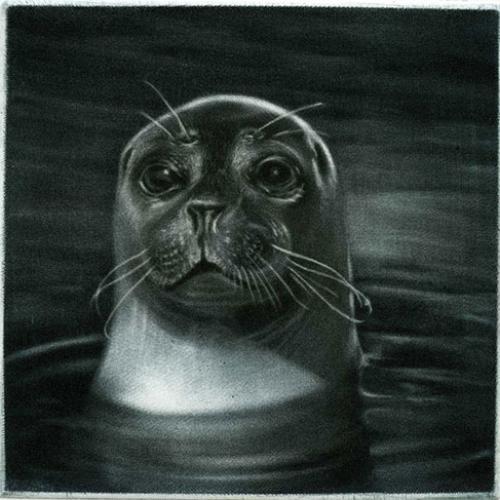 Le-phoque, la tête hors de l'eau